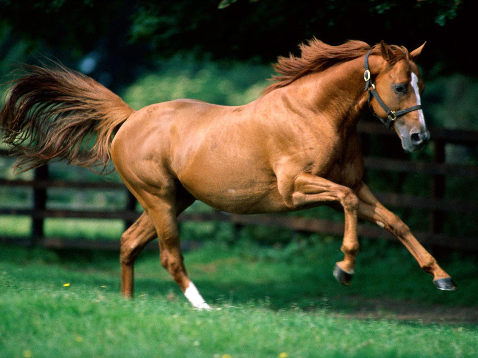 Running Horses Wallpapers For Desktop Backgrounds Kuda Cantik