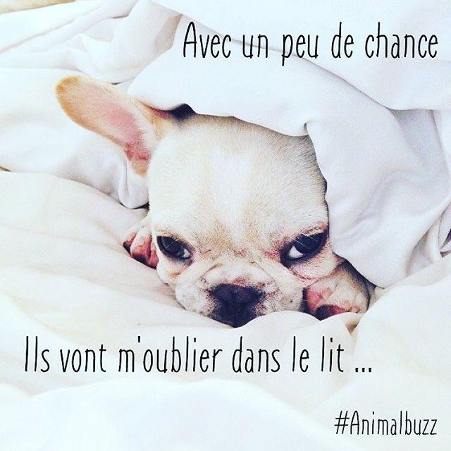 Dur Dur Le Matin Animalbuzzz Bonjour Chien Animaux Animals Baby Animals Animal Lover