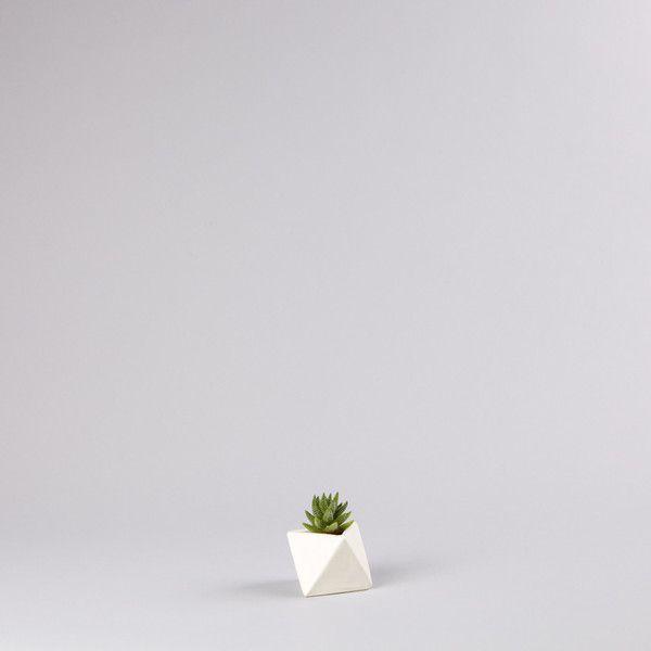 Adorable Succulent