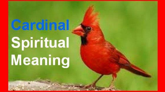 Cardinals Spiritual Meaning Symbol Of Cardinal Birds What It