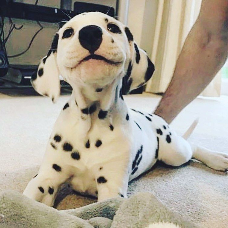 Pin By Daisy On Dogs In 2020 Cute Baby Animals Cute Animals