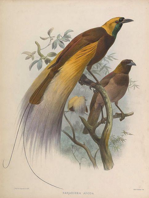 Feather, Fiber & Fauna