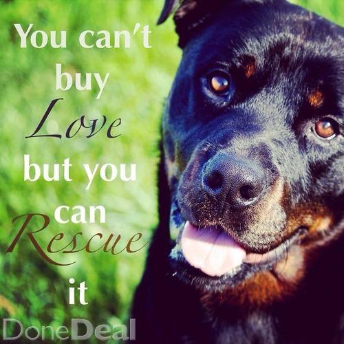 Consider Rescue Please Service Animal Rescue Pets