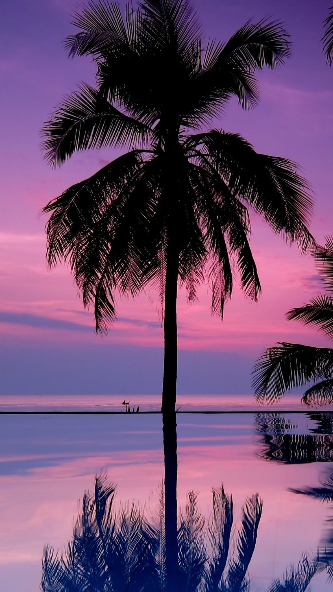 Download Wallpaper 1080x1920 palm trees, night