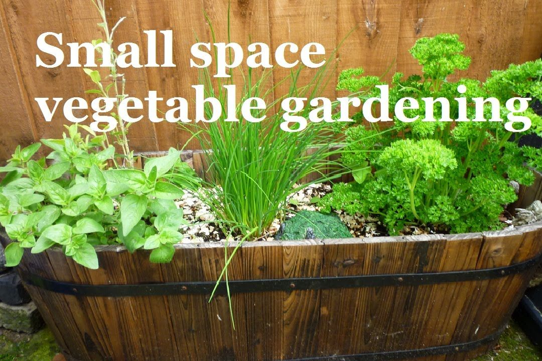 Small space vegetable gardening - A series about ...