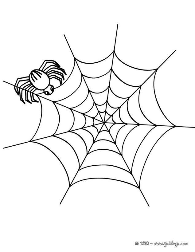 Dibujo Para Colorear Araña Fabricando Su Telaraña Para