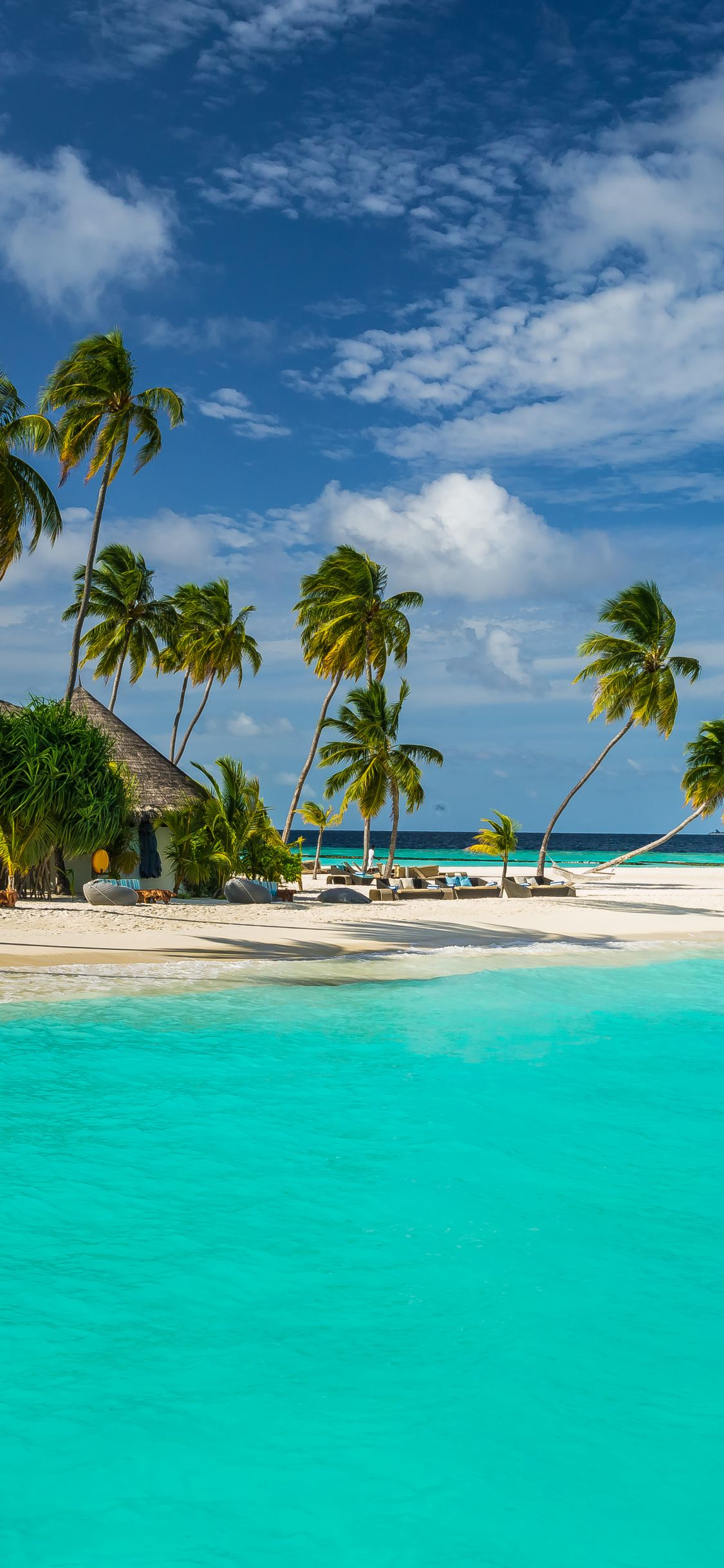 Maldives Seaside Mobile Wallpaper Sea Palm Tree Tropical Resort