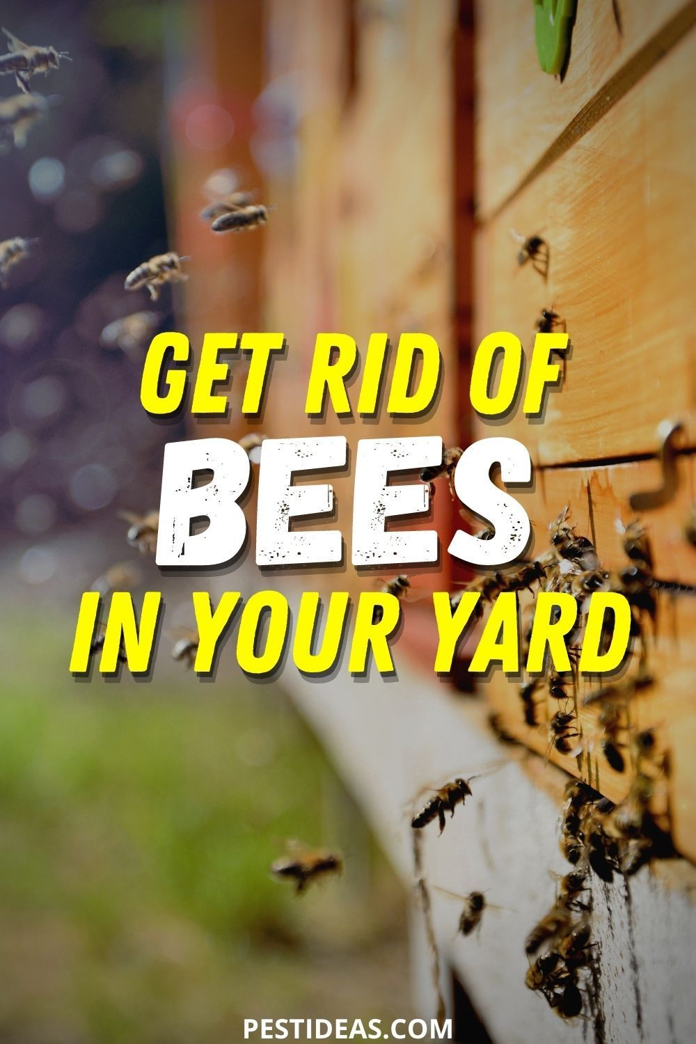 How to Get Rid of Bees in Your Yard in 2020 | Bee ...