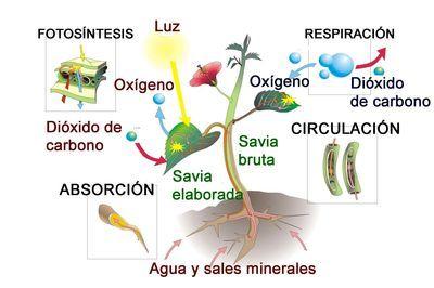 Resultado De Imagen Para Alimentacion De Las Plantas Bio Map