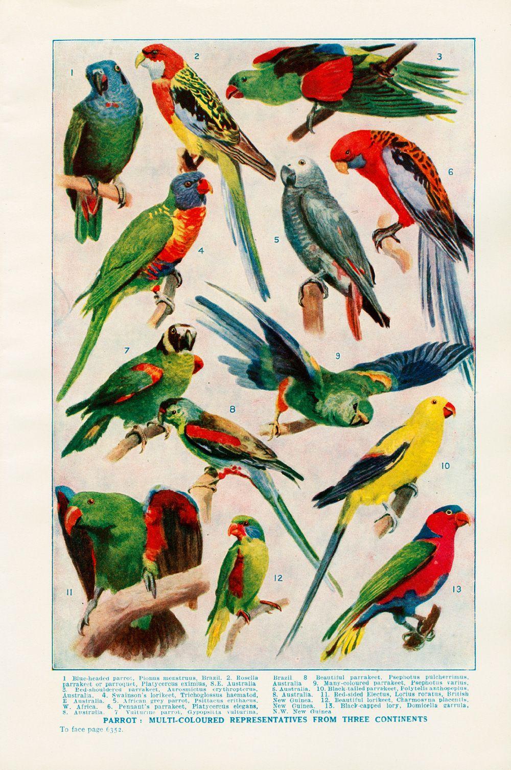 Parrot Poster Aves De Colores Loros Aves