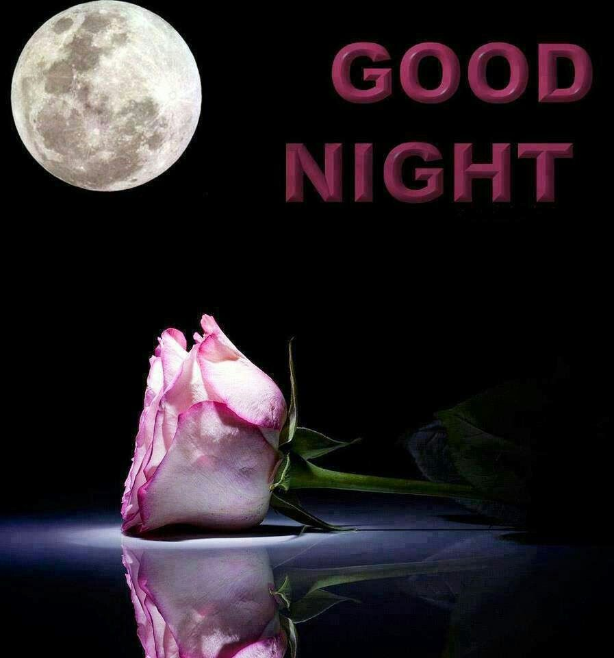 Good Night Good Night Sweet Dreams Pinterest Best