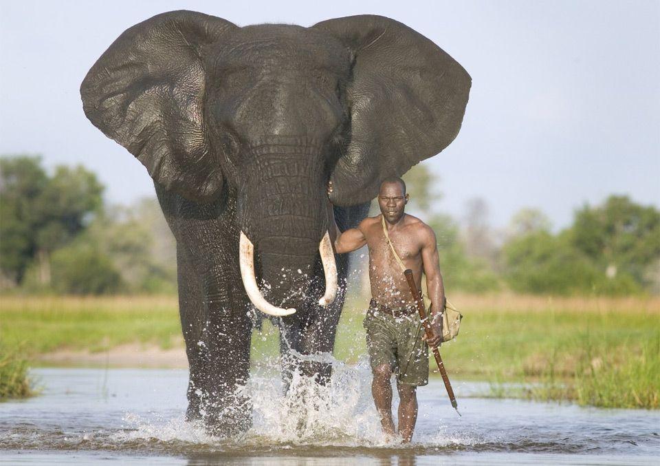 man + elephant