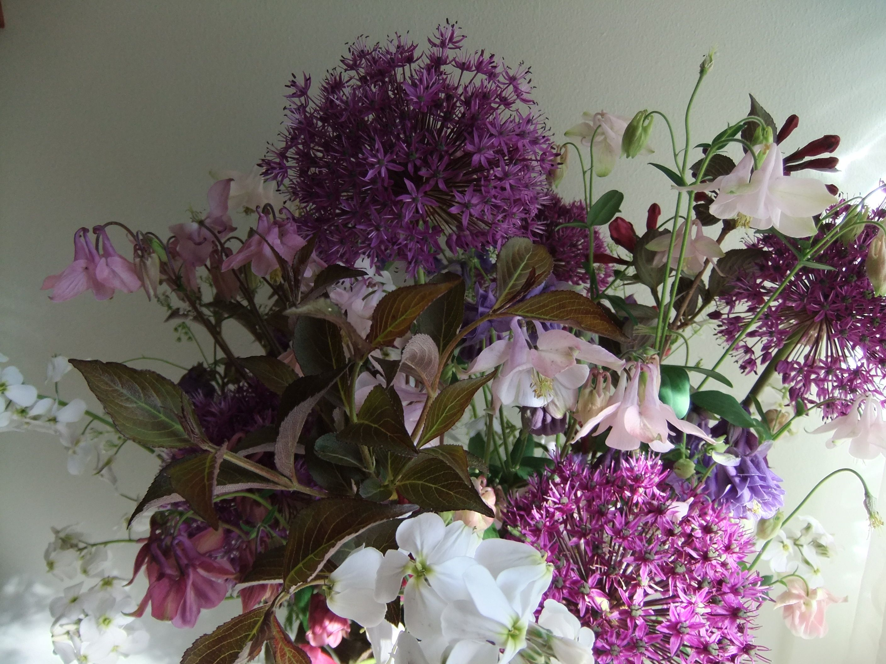 Early Summer Bouquet Of English Country Flowers Allium Sweet Rocket And Aquilegia Summer Bouquet Country Garden Flowers Wedding Flowers