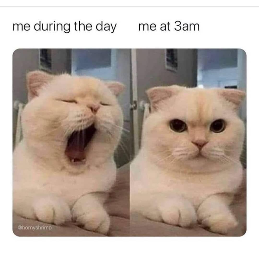 No Text Funny Animal Memes Funny Cat Memes Funny Dog Memes