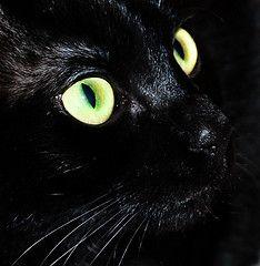 Green Cat Eyes