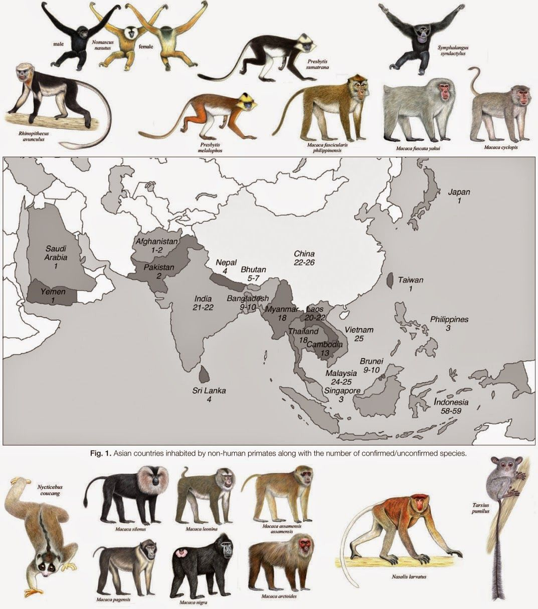 [Primate • 2014] Asian Primates An Updated Taxonomy and