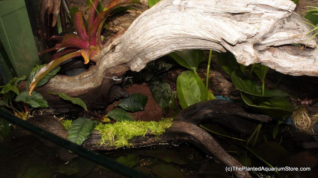 Paludarium event at the planted aquarium store in