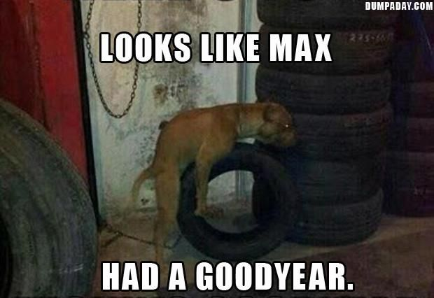 Looks Like Max Had A Goodyear Funny Pictures With Captions
