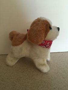 Cute Little Puppy | eBay