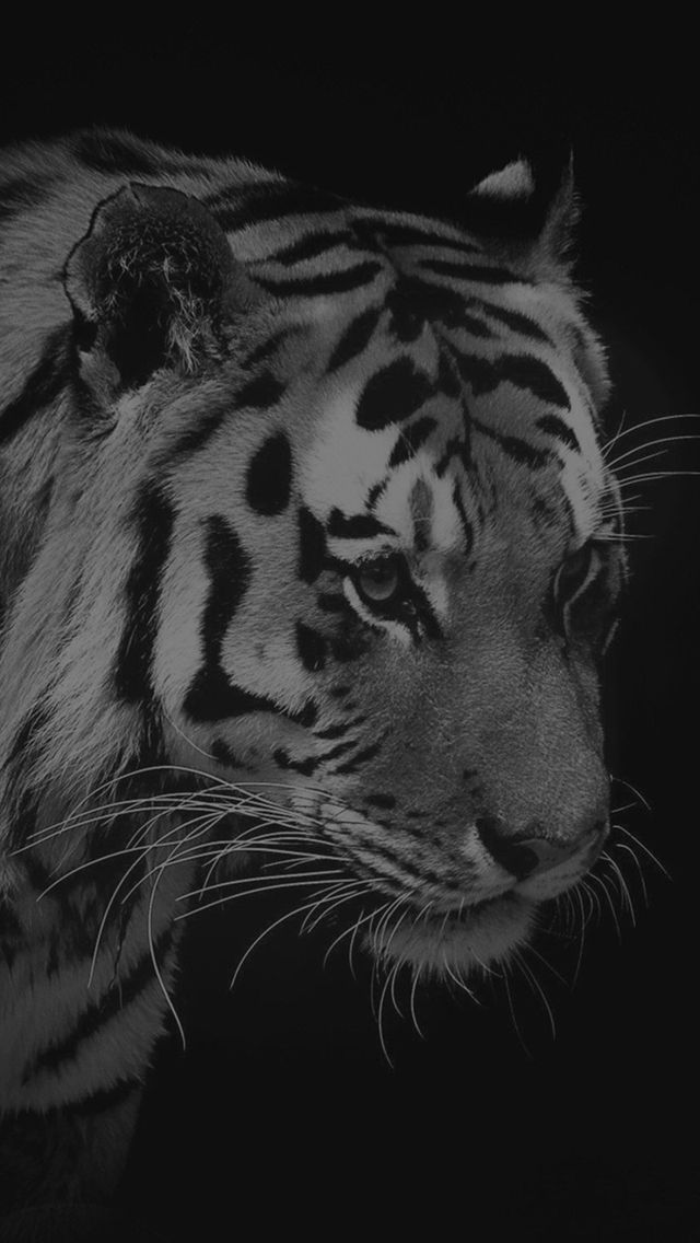 Tiger Dark Animal Love Nature #iPhone #5s #wallpaper
