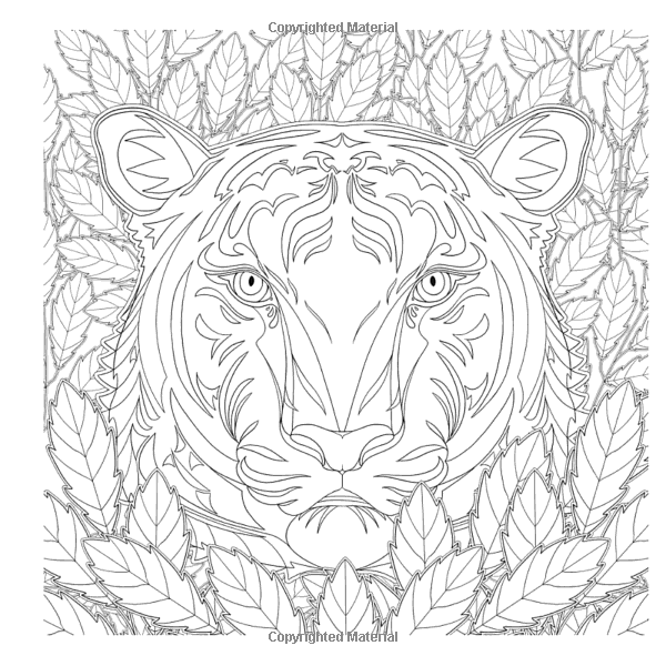 Amazon.com: National Geographic Magnificent Animals: A Coloring Book (9781426218156): Hayrullah Kaya: Books