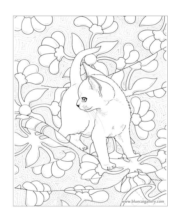 Bluecat Gallery - Adult coloring books by Jason Hamilton | Animales ...