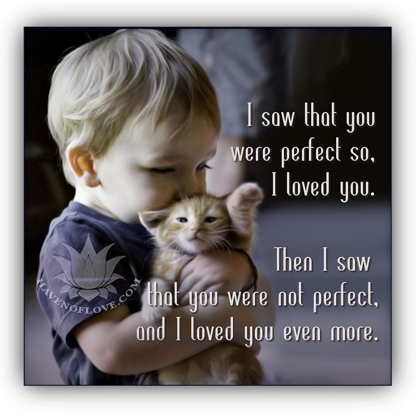 Cute pictures image by Barbara Dorton Hug your cat day