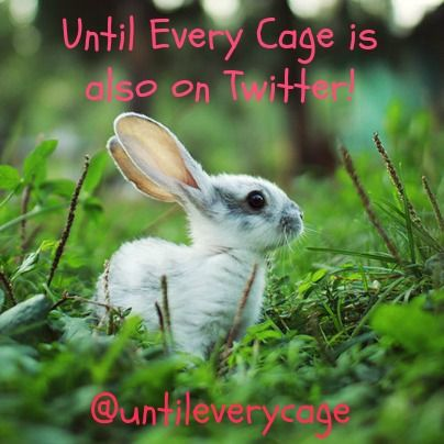 Are you on Twitter? Until Every Cage is and we'd love to connect with you there!  https://twitter.com/untileverycage  #twitter #untileverycage #tweets #socialmedia #animals #vegan #animalrights #veganism
