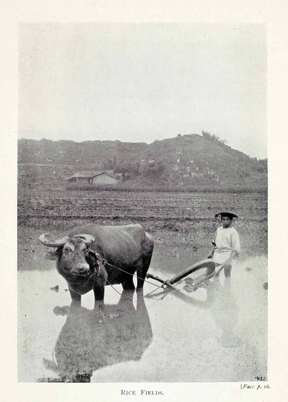 Rice Paddy Hat | ... Print Rice Fields Paddy Ox Agriculture Landscape China Plow Hat