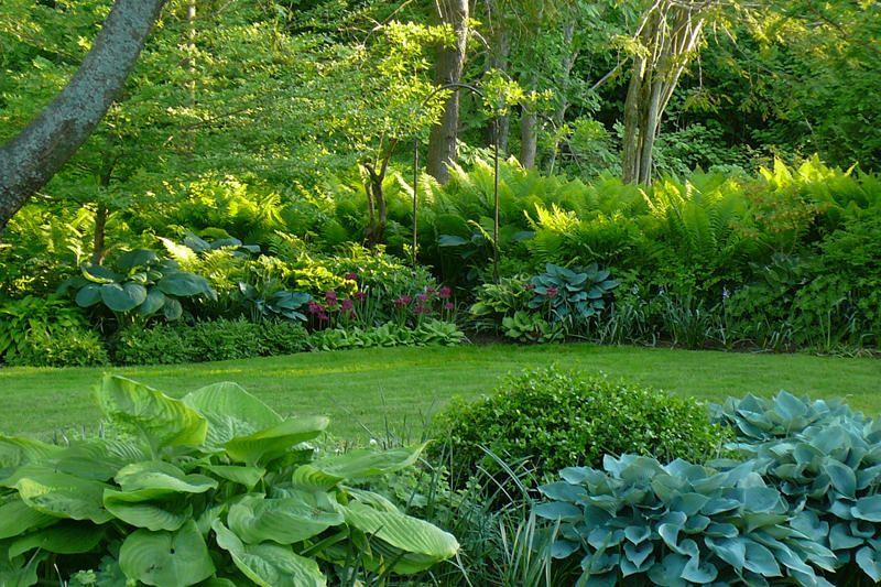 Verdant And Soft With A Wonderful Depth Of Planting And Variation In