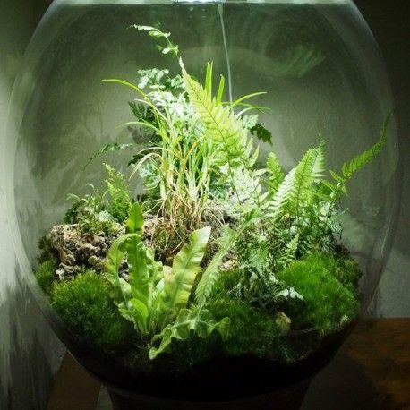 voici un kit terrarium tout y est pour faire un joli mini jardin d 39 int rieur la nature dans. Black Bedroom Furniture Sets. Home Design Ideas
