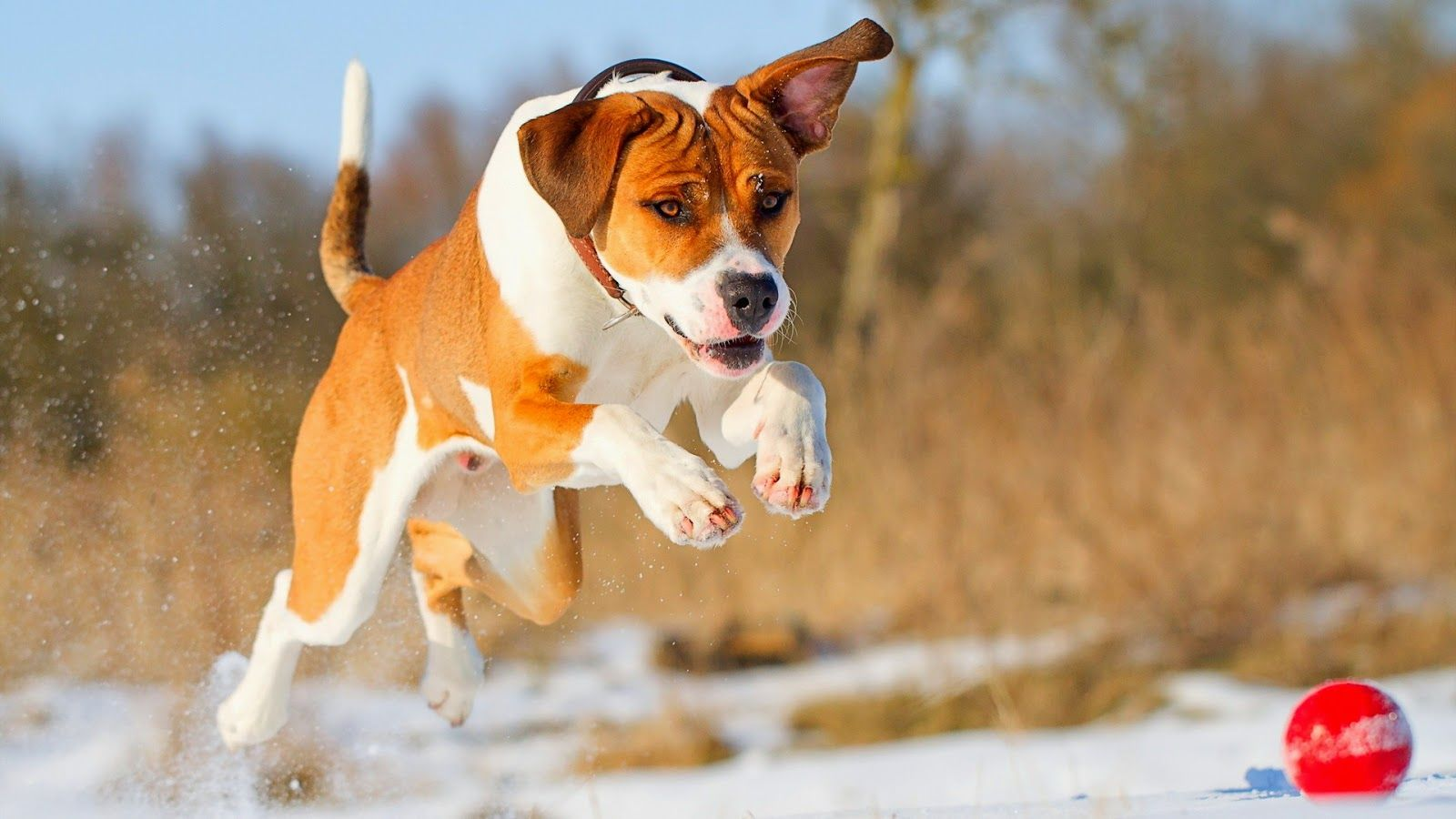 Cute Dog Wallpapers Wallpaper Обои с собаками, Милые