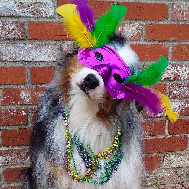 21 Dogs In Their Mardi Gras Finest Mardi Gras Carnival Mardi