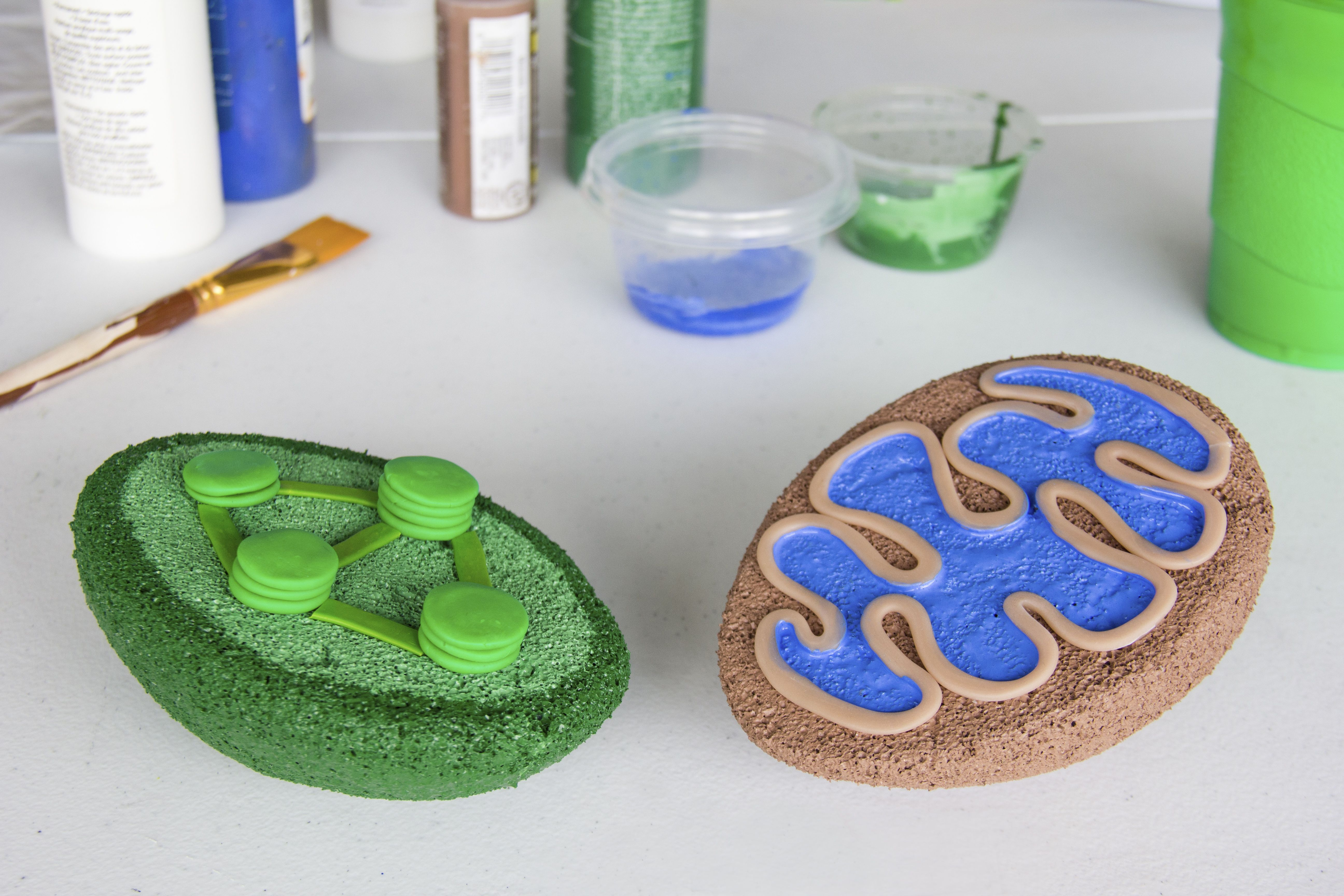 3d plant cell model project materials - How To Build A 3d Model For Cell Biology Projects Mitochondria Chloroplast