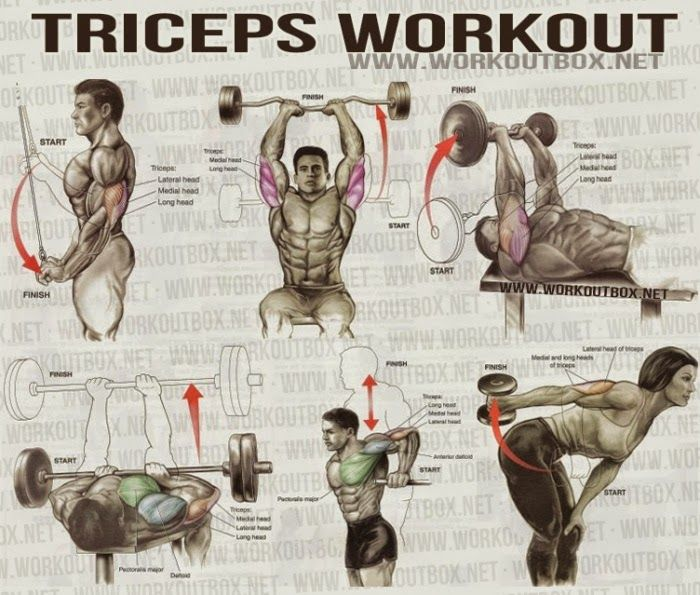 The Best Tricep Exercises For Mass
