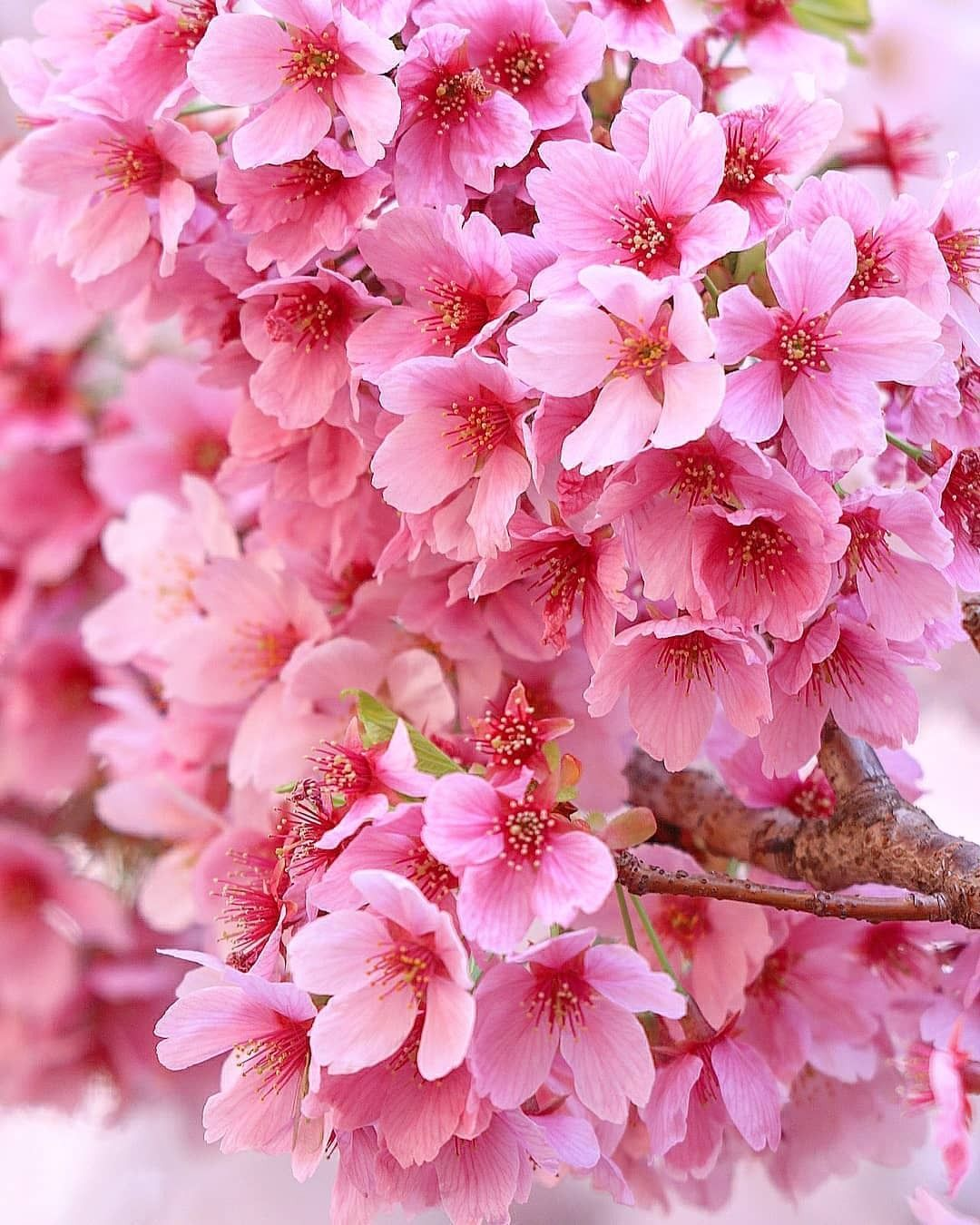 Pin by Christine A. on Spring is in the Air Flowers