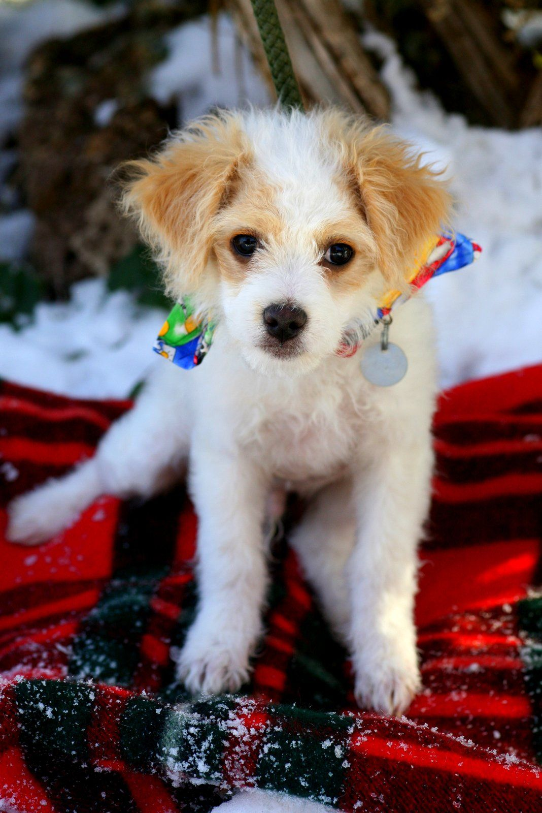 Shelter Puppy 866 947 9173 2801 County Road 114 Glenwood Springs Co 81601 Shelter Puppies Animal Shelter Rescue Dogs