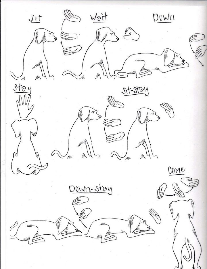 Rescue and shelter dogs, Freedom Tails Hand Signs and Commands ...