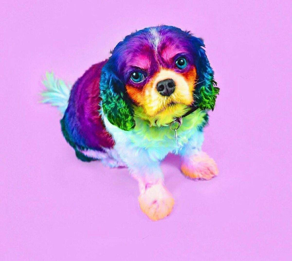 Pin By Aubrey Chanthalack On Little Doggies Cute Baby Animals
