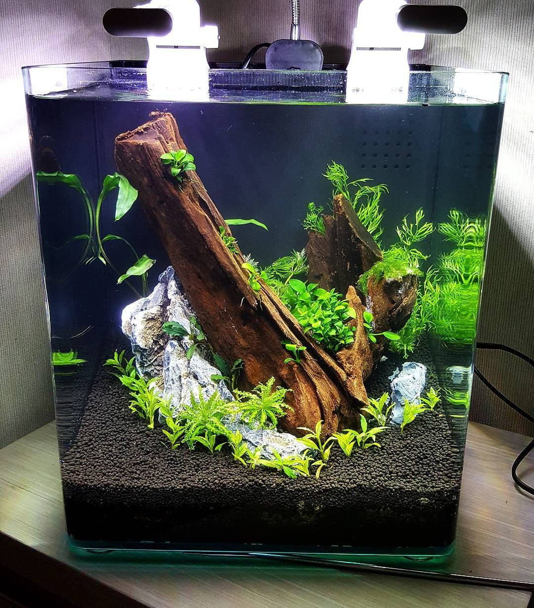 260 Likes 5 Comments Jeff 39 S Aquaworld Jeff Aquarist On Instagram Submerged Low Tech For Now Till I Get My C Susswasseraquarium Aquascaping Aquarien