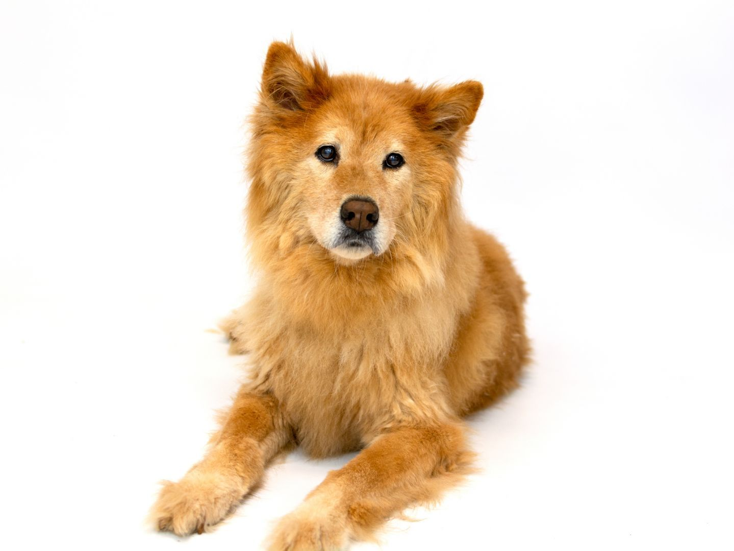 Adopt Mary Lou On Pet Adoption Animal Rescue Adoption