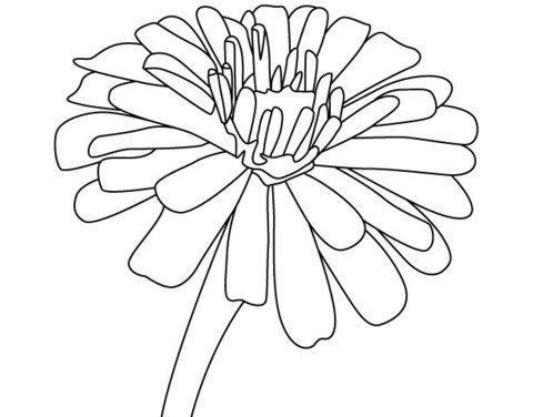 Free Zinnia Flower Coloring Pages