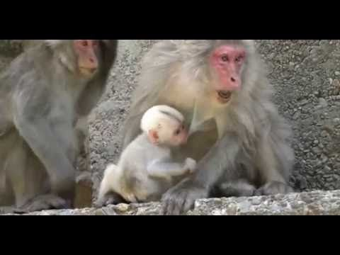 Funny Monkey Videos - Funny Animals Videos - Cute and funny baby monkey compilation