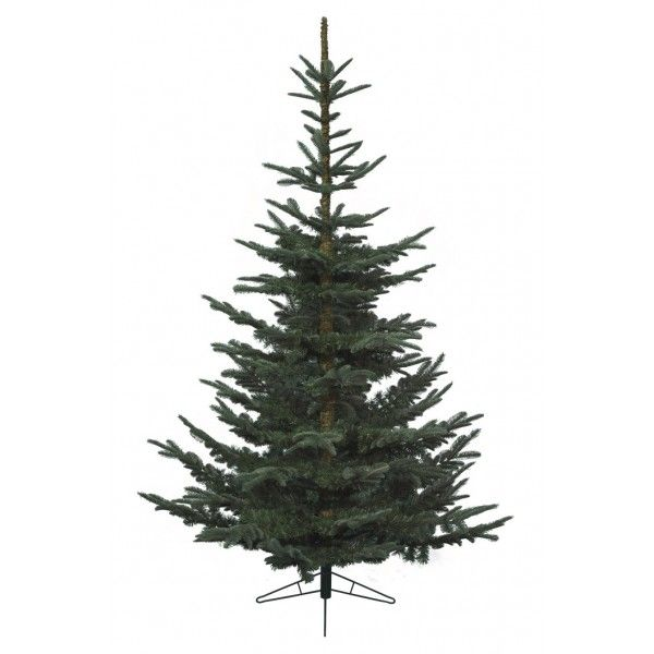 Nobilis Fir 10ft 300cm When We First Came Across The Nobilis Fir Christmas Tree By Kae Realistic Christmas Trees Artificial Christmas Tree Fir Christmas Tree