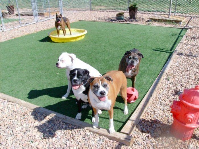 The Grateful Dog Pet Boarding In Brighton Colorado Pet Pets