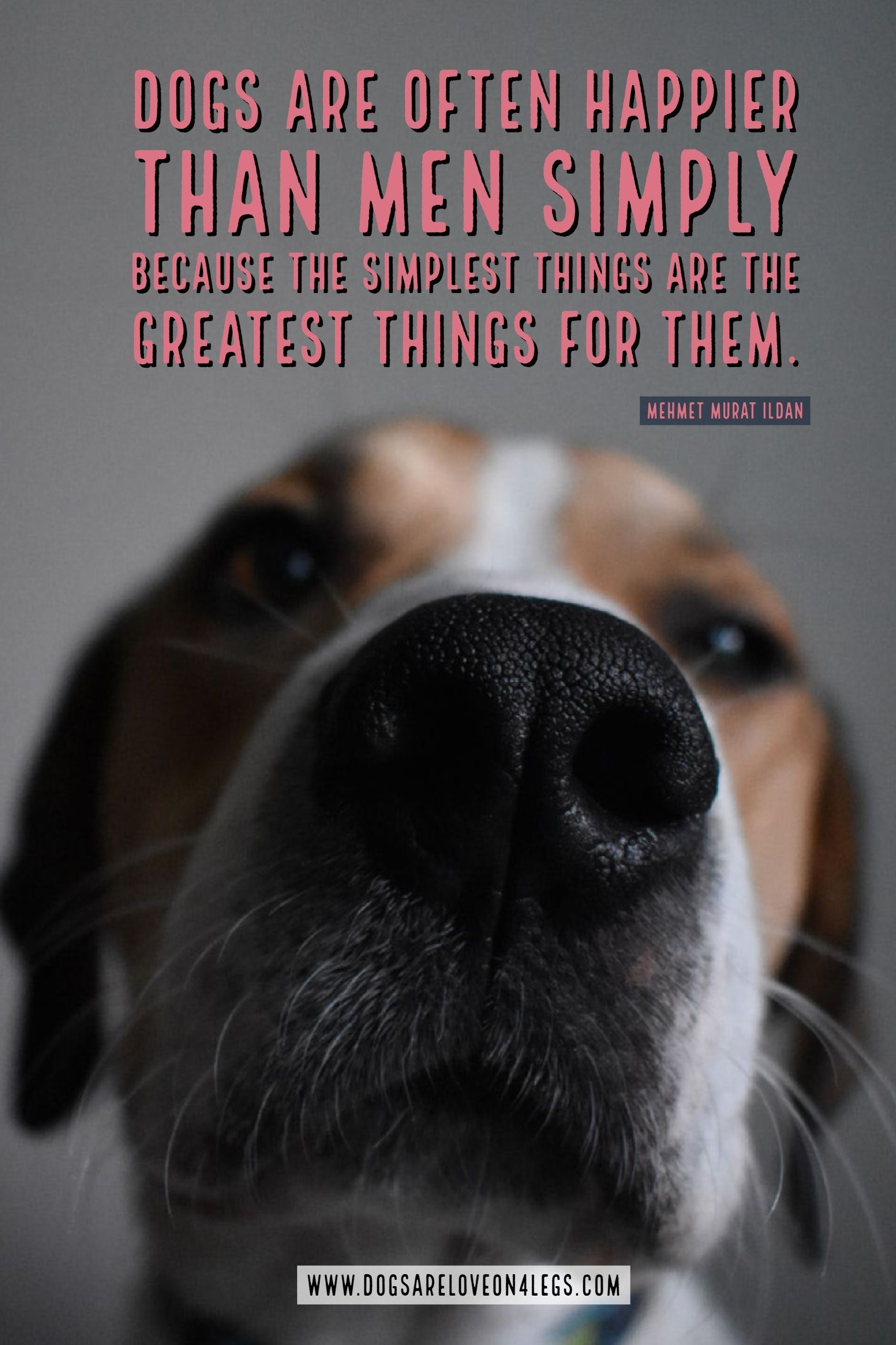 Dog Quote Dogs Are Often Happier Than Men Dog Dog Quotes