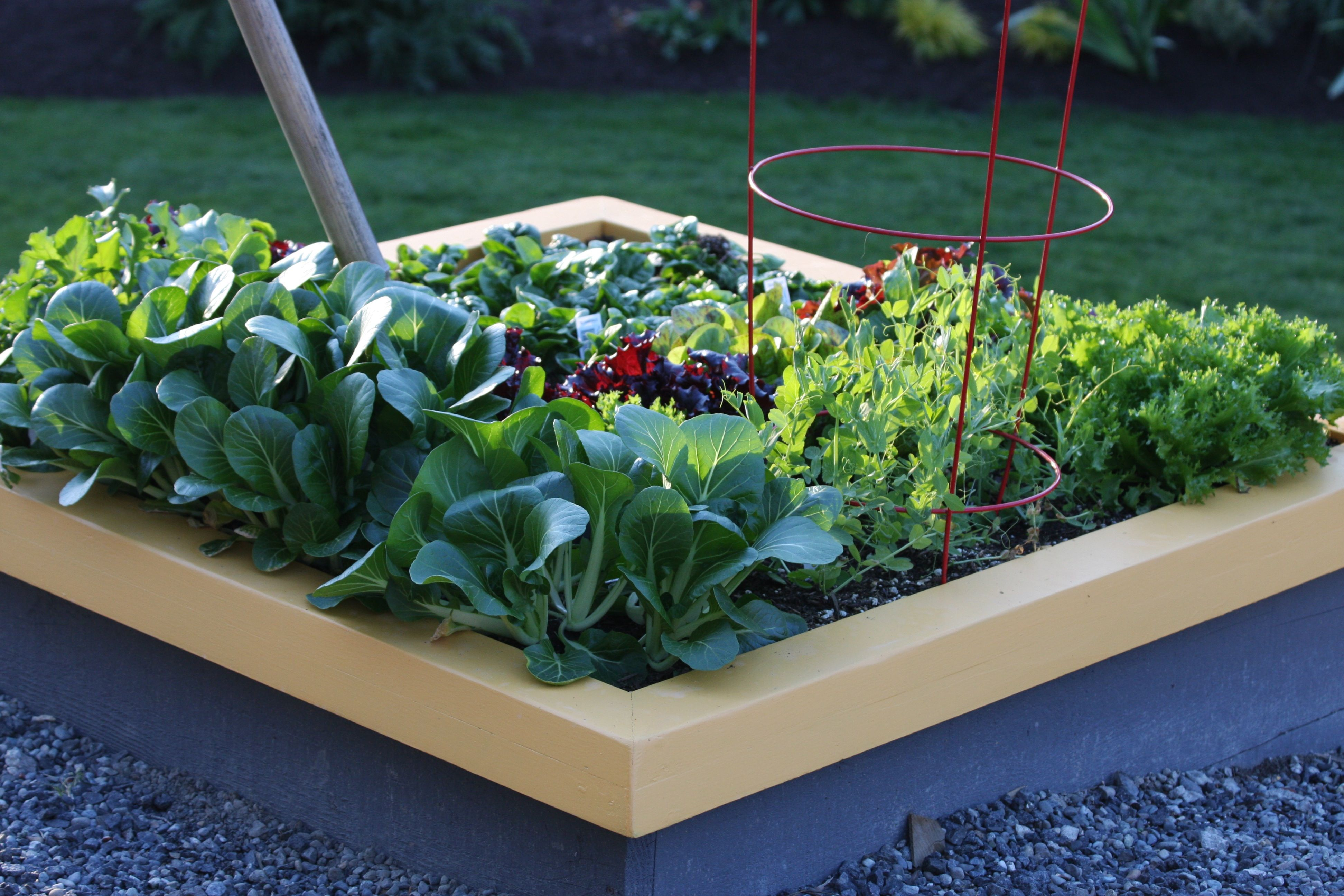 Amazing Planting A Square Foot Salad Garden | Video   How To Grow Your Own Salad  Right