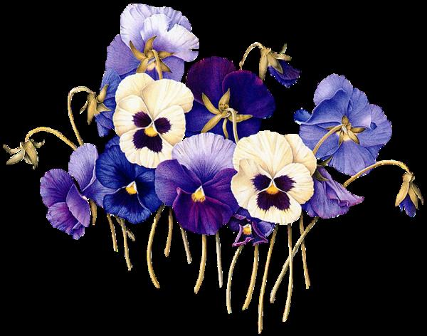 fleurs des pensees jardin dessin fleur fleurs et. Black Bedroom Furniture Sets. Home Design Ideas