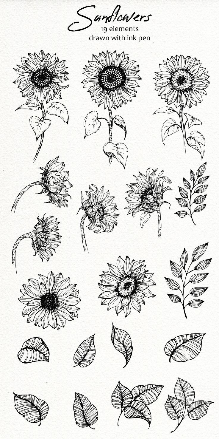 Sunflowers SVG, PNG Sunflowers Clipart, Printable