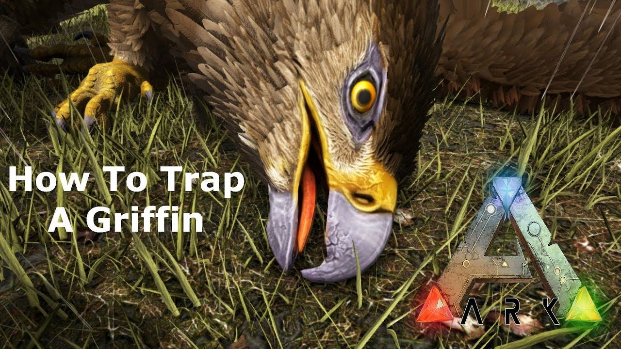 The Easiest way to Trap Griffin Ark Survival Evolved | Ark
